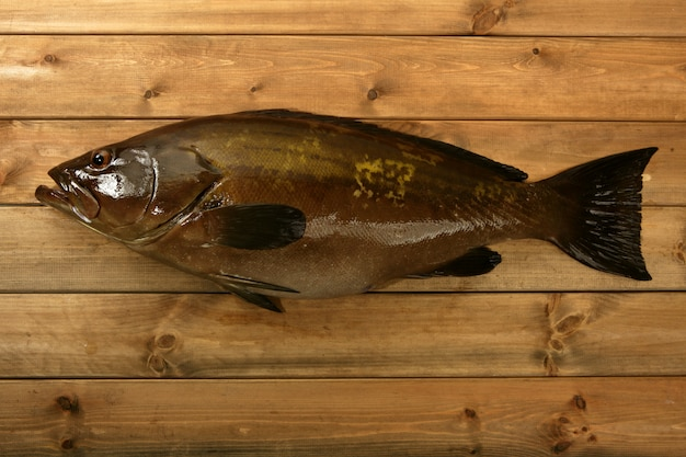 Cernia pesce frutti di mare, la pesca cattura su legno