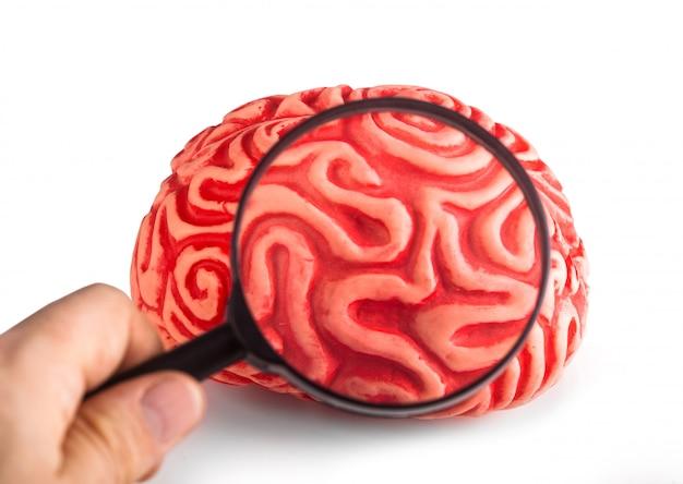 Cervello di gomma visto con la lente d'ingrandimento