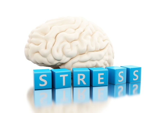 Cervello umano 3d con la parola di sforzo in cubi