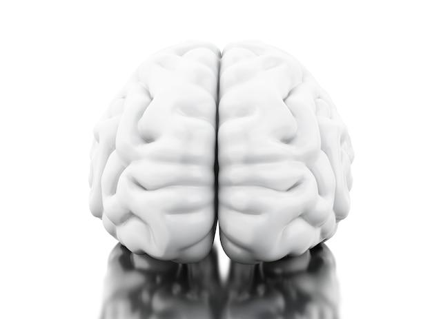 Cervello umano 3d. concetto di anatomia della scienza