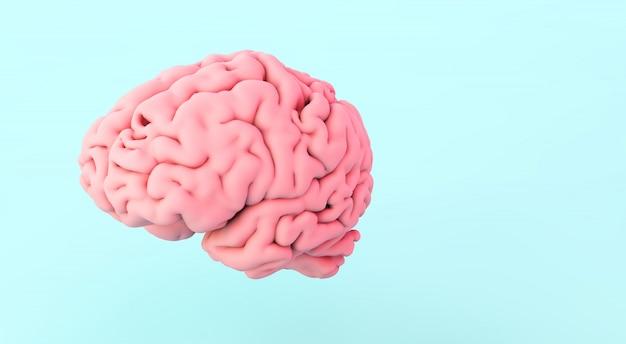 Cervello umano su blu