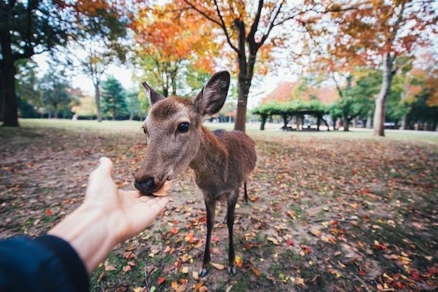 Cervi e animali nel parco di nara, kyoto, giappone
