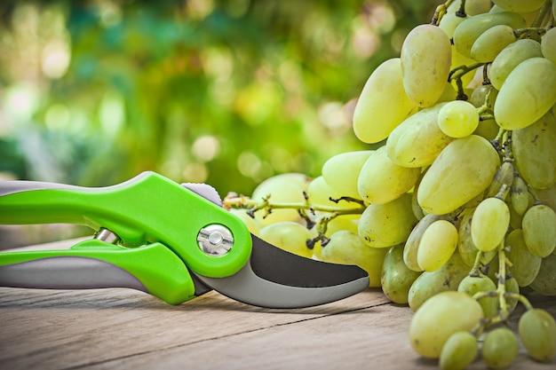 Cesoie a mano e uva verde