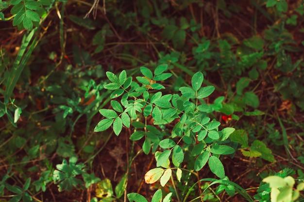 Cespuglio di verde di vista superiore in una foresta