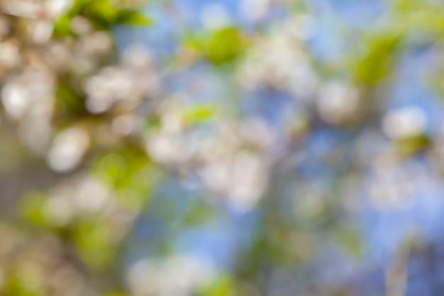 Cespuglio rami foglie verdi fresche