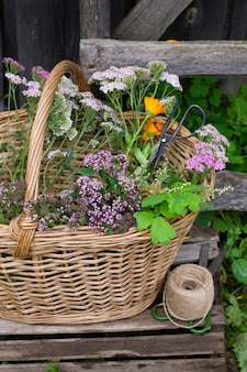 Cesto di erbe medicinali su erba