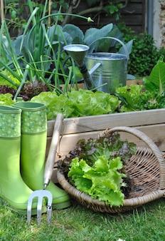 Cesto di insalata in giardino