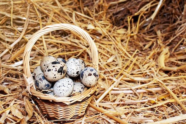 Cesto di uova di quaglia