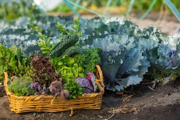 Cesto di verdure in giardino
