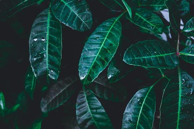 Chiave bassa del fondo delle foglie verdi