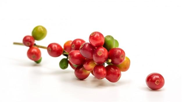 Chicchi di caffè arabica freschi