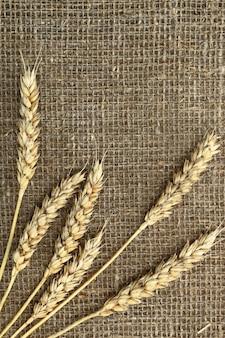 Chicchi di grano con pane sul tavolo