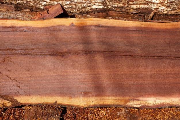 Chico zapote manilkara zapota legno messico