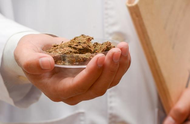 Chimico dello scienziato che lavora in laboratorio alla ricerca della cannabis