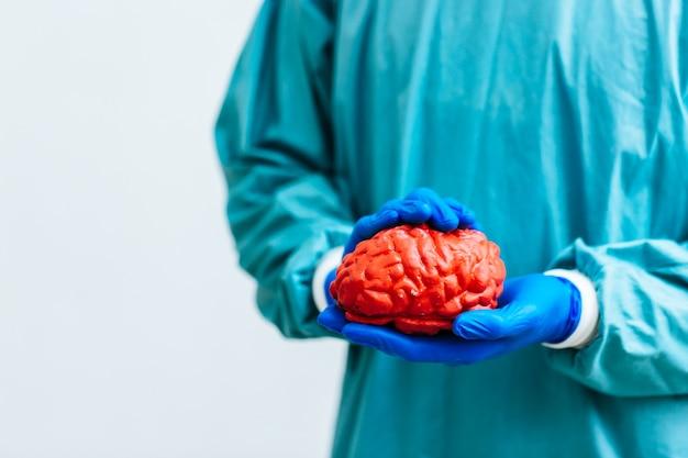 Chirurgo che tiene un cervello. modello anatomico del cervello umano.