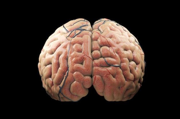 Chiuda in su brain concept realistico. rendering 3d.