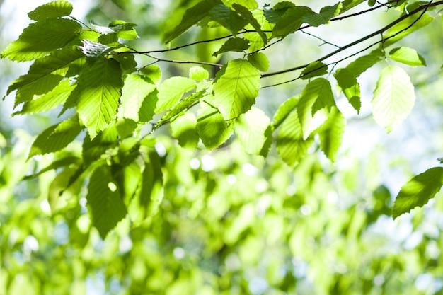 Chiuda in su dei fogli verdi su priorità bassa verde