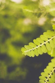 Chiuda in su dei fogli verdi