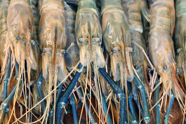 Chiuda in su dei gamberi grezzi, gambero d'acqua dolce gigante in tailandia.