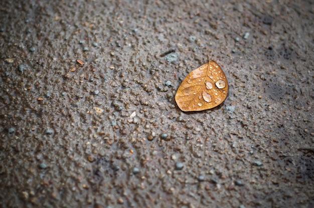 Chiuda in su del foglio asciutto su pavimentazione dopo la pioggia
