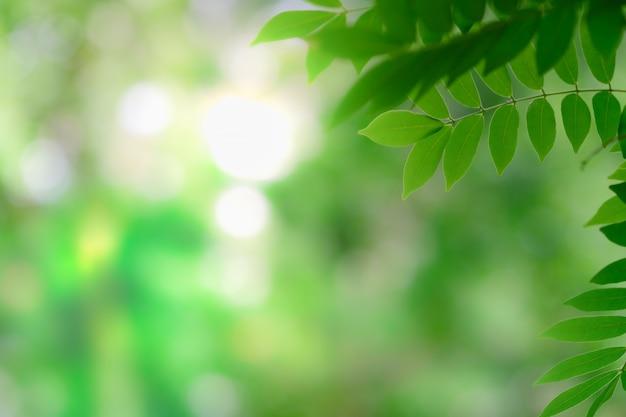 Chiuda in su del foglio verde di vista della natura sulla priorità bassa vaga della pianta