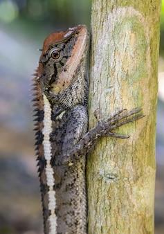 Chiuda in su del rettile colorato sull'albero