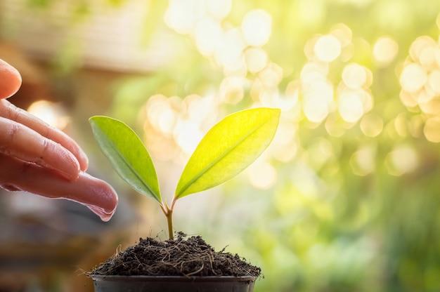 Chiuda in su della mano della donna che consolida e che innaffia le piante giovani nel giardino