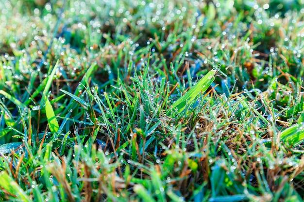 Chiuda in su della rugiada di mattina fresca sull'erba della sorgente