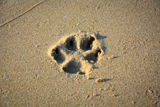 Chiuda in su della stampa della zampa del cane sulla sabbia
