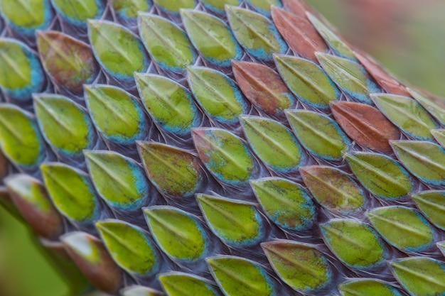 Chiuda in su della struttura della pelle di serpente