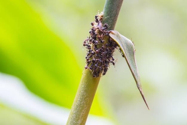Chiuda in su delle formiche sulla pianta