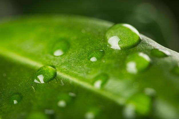 Chiuda in su delle gocce dell'acqua sulle foglie