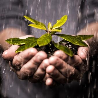 Chiuda in su delle mani che tengono la piantina sotto la pioggia
