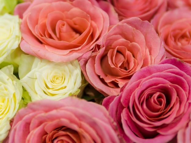 Chiuda in su delle rose naturali variopinte