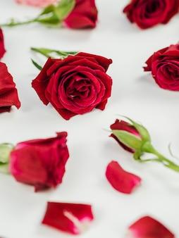 Chiuda in su delle rose rosse fresche