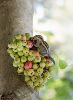Chiuda in su dello scoiattolo che mangia frutta sull'albero