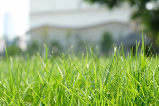 Chiuda in su di erba spessa fresca