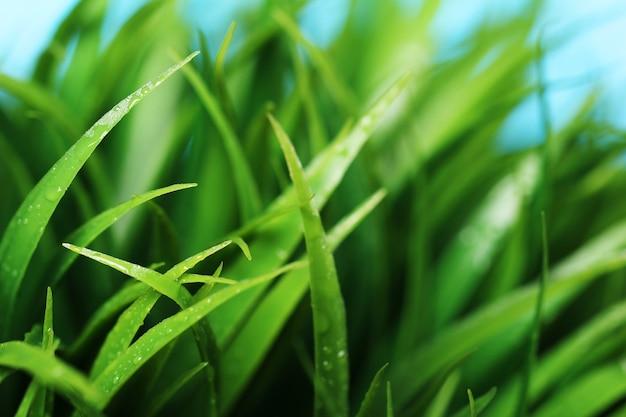 Chiuda in su di erba verde