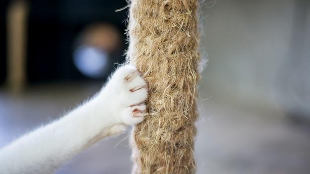 Chiuda in su di una zampa di un gatto bianco.