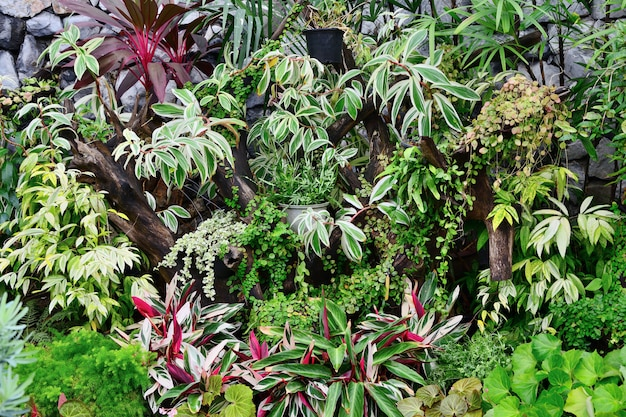 Chiuda in su di varie piante ornamentali