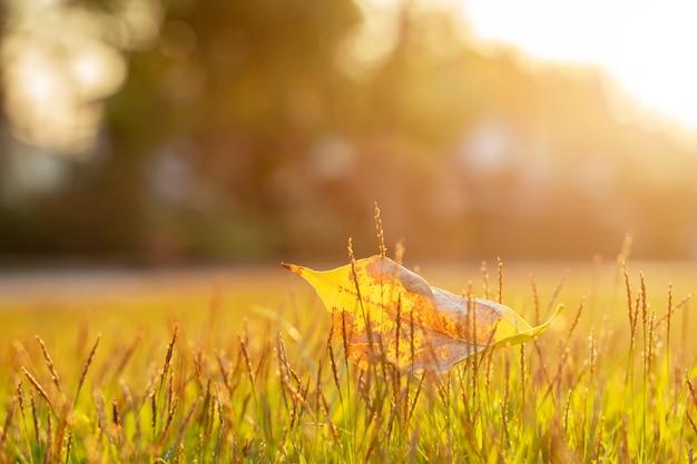 Chiuda in su di vecchio foglio su erba