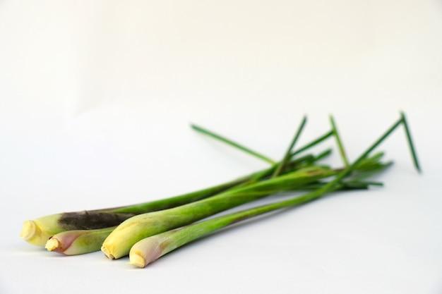 Chiuda in su isolato di citronella fresca a base di erbe su priorità bassa bianca