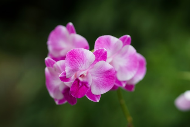 Chiuda in su, orchidea bella di priorità bassa