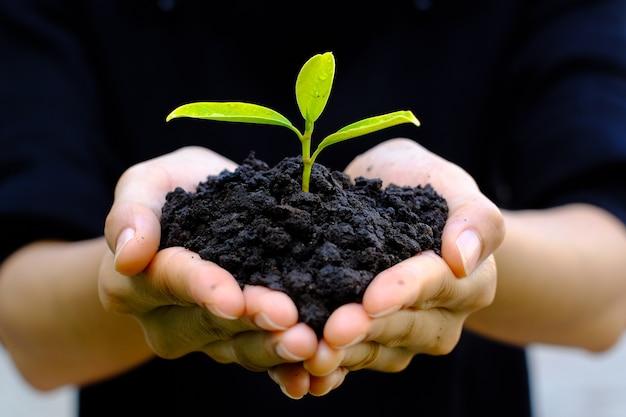 Chiuda in su sul gesto di mano umana tenere una piccola pianta crescente sulla natura verde offuscata,