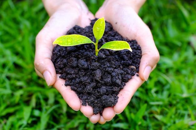Chiuda in su sul gesto di mano umano tenere una piccola pianta crescente su erba verde offuscata.