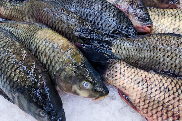 Chiuda su, carpa fresca dei pesci organici su ghiaccio sul mercato di prodotti freschi