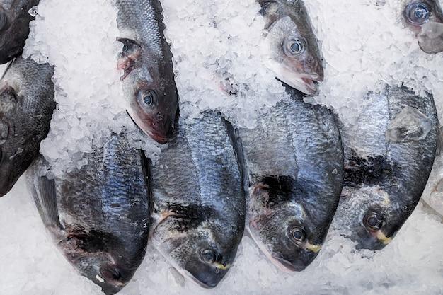 Chiuda su, carpa organica fresca dei pesci su ghiaccio sul mercato di prodotti freschi, fondo. trama di pesci di mare. molta radice di carpa organica