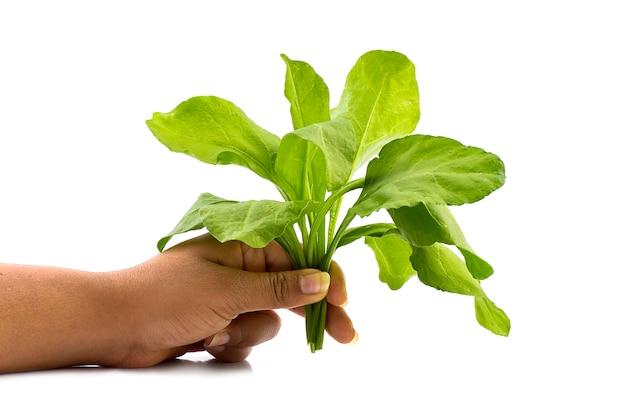 Chiuda su degli spinaci della tenuta della mano a casa - cibo sano, dieta, alimento vegetariano e concetto della gente.