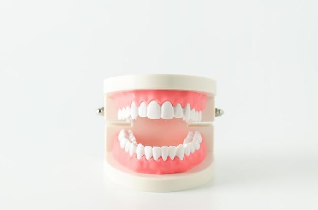 Chiuda su dei denti bianchi modellano con gomma rossa su fondo bianco