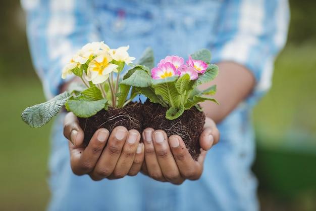 Chiuda su dei fiori della tenuta dell'uomo nel giardino